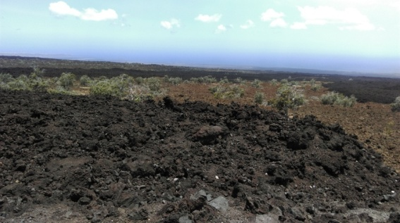 typical view at the side of the road on Big Island