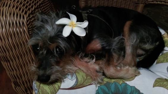 the hostel dog