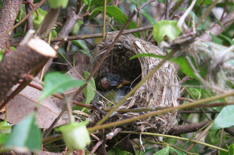 a baby bird
