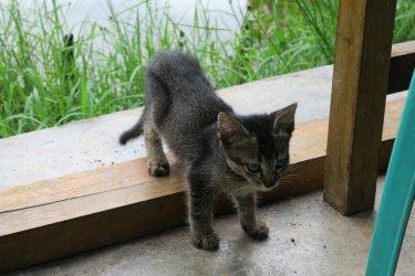 homestay kitten