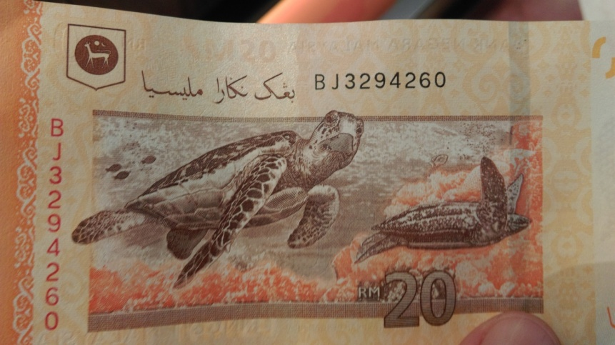 love that they have turtles on their money