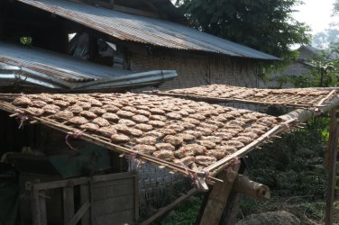 drying of fermented soybeans