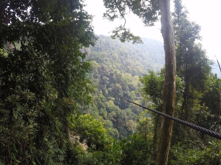 zip line disapearing in to the jungle