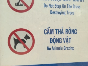grazing dogs - interesting! :-D