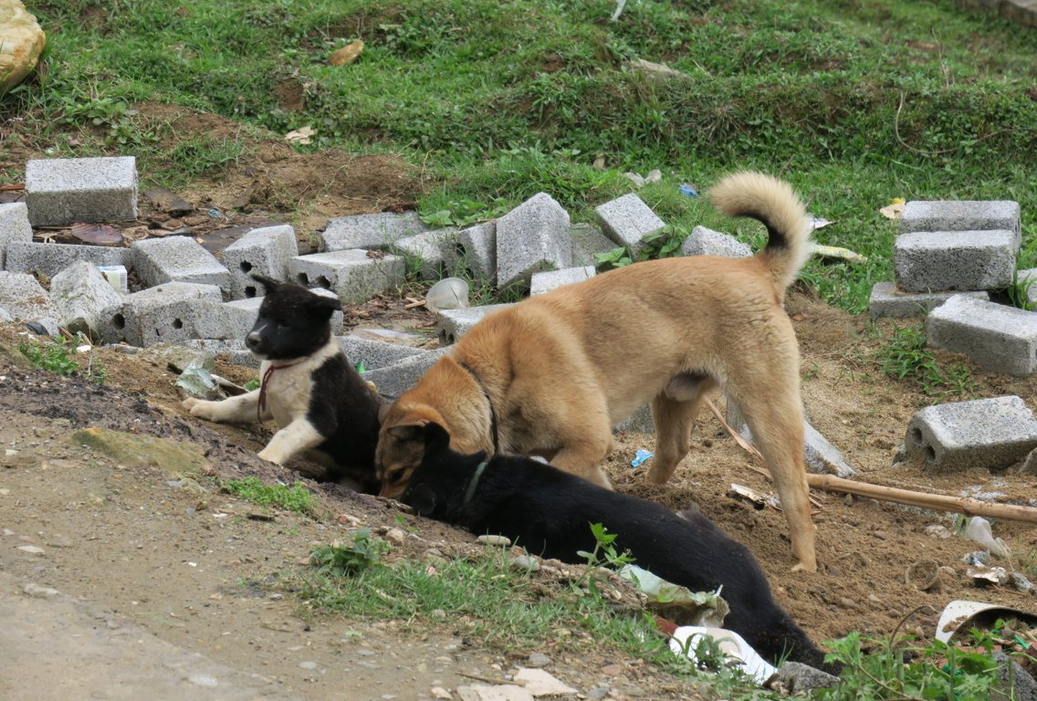 the dogs of our homestayy