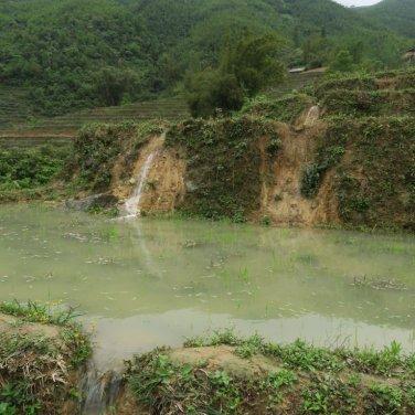 walking along the rice fields
